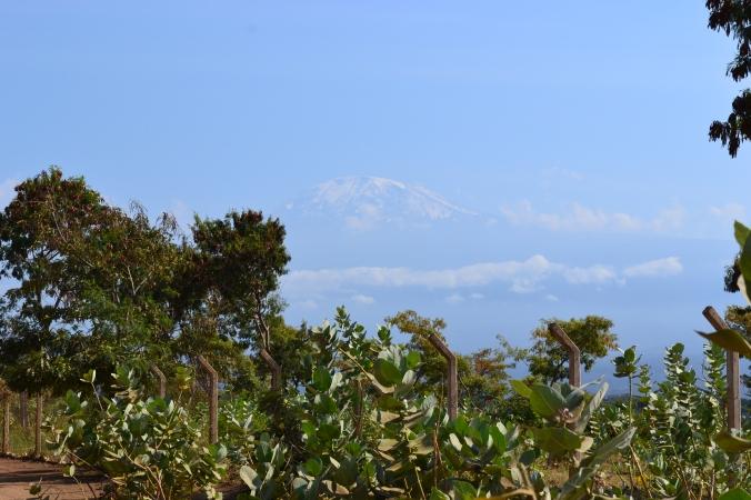 Timide Kilimanjaro