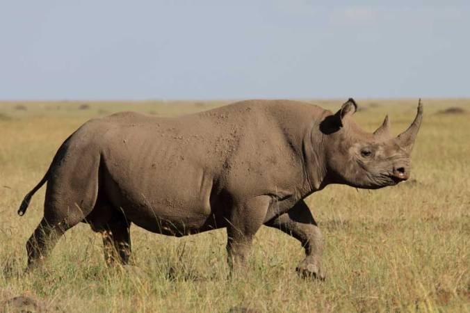 Photo Loïc Mathel sur Melting Pot Safaris