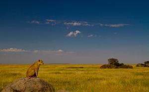 Semetu Kopjes, Serengeti .