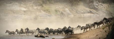 zebres bannière